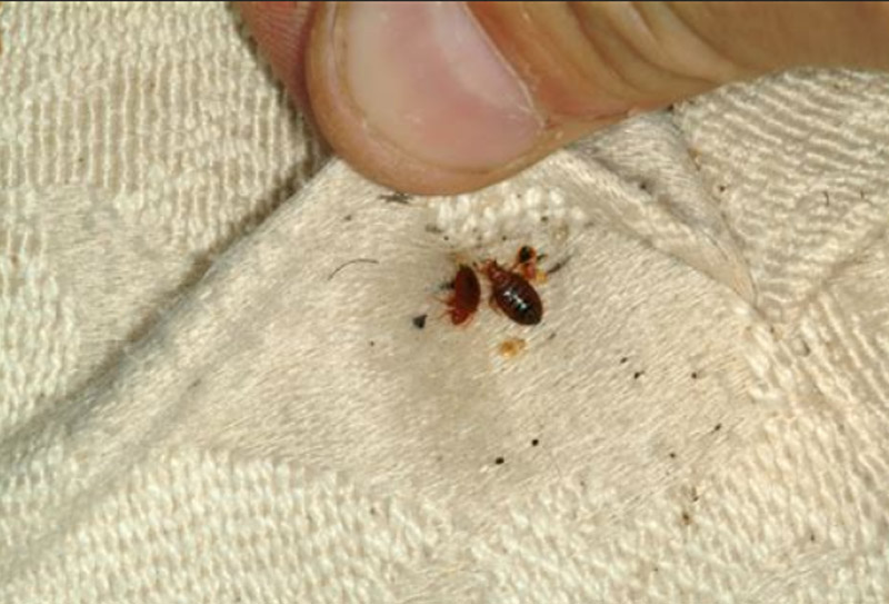 hampshire gallery bed bug removal company