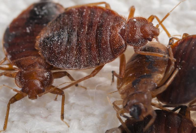 swindon gallery how to remove bed bugs