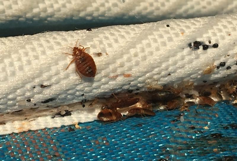 taunton gallery bed bug extermination
