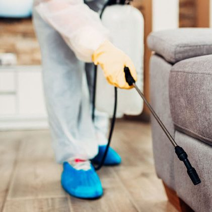 domestic bed bug treatment bournemouth